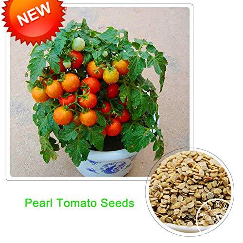 HONIC Red Pearl Tomato Bonsai, s und Gemüse Topf Mini Tomatenpflanzen Balkon für Hausgarten-100 PC/Los, ZJ441: Mix