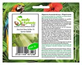 Pezzi - 3x Zucchina Grey Griglia F1-Alte Varietà Seme Verdure Giardino KS458 - Seeds Plants Shop Samenbank Pfullingen Patrik Ipsa