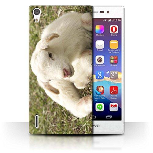 eSwish Carcasa/Funda Dura para el Huawei Ascend P7 LTE/Serie: Lindos Animales de Compañía - Cordero/Oveja