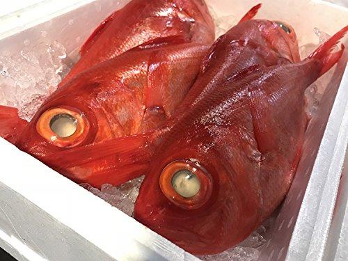 静岡県産 金目鯛(キンメダイ)1尾 1kg〜1.5kg(正味 700g前後) (下処理済(うろこ、内臓とり))
