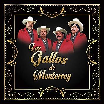 Los Gallos de Monterrey