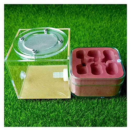 ZOUJIANGTAO Ant Farm Nest Taller de Hormigas de Hormiga de Hormiga de Hormiga de Hormiga para niños Hormiga sientífica House Juguetes biológicos (Color : D, Size : 7x7x7cm)