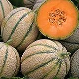Melone retato degli ortolani (Semente)