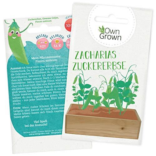 Zuckererbsen Samen: Premium Zucker Erbsen Samen für Kinder und Erwachsene – Gemüse Samen für ca 10x Zuckerschoten Pflanze – Zacharias Zuckererbse – Gemüse Saatgut für Kids – Samen Gemüse von OwnGrown