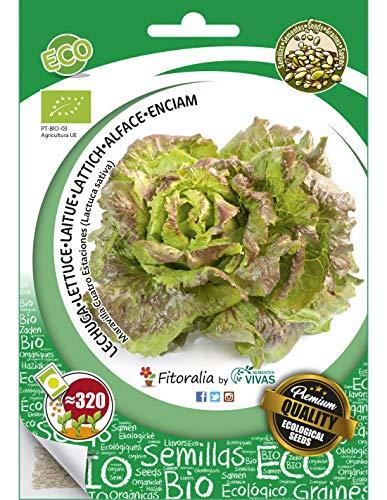 Lechuga ecológica ( maravilla cuatro estaciones) - Semillas fitoralia