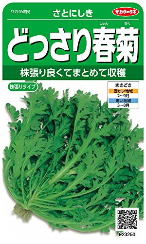 サカタのタネ 実咲野菜3250 どっさり春菊 さとにしき 00923250