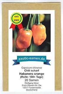 Der Ursprung aller Habaneros - Chili Habanero orange - 20 Samen