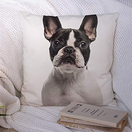 Decorative Pillowcase Front Close French Bulldog Looking Camera Animals Wildlife Dog Sitting Black Canine Carnivore Cut Throw Pillow Cover Soft Square Cushion Case for Bed Couch Car 16x16 Inch