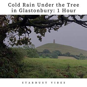 Cold Rain Under the Tree in Glastonbury: One Hour