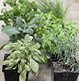 Gardenuity Herb Collection, 6 Fully Rooted Seasonal Culinary Herb...
