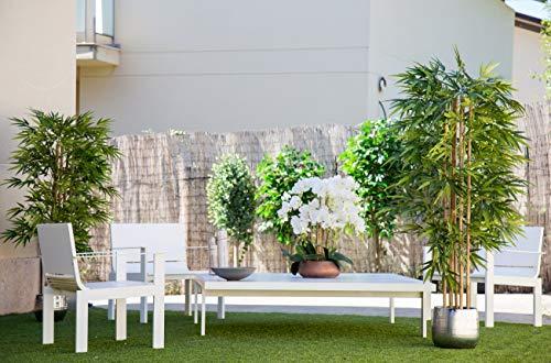Maia Shop Bambusbaum mit Natürlichem Schilf, ideal für die Innendekoration, Baum, Künstliche Pflanze (180 cm), Bamboo - 4