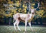 Edition Seidel Jagd und Wild Premium Kalender 2020 DIN A3 Wandkalender Tiere Wald Natur