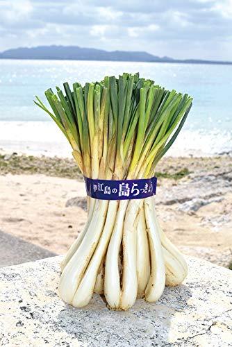 沖縄県産 島らっきょう500g
