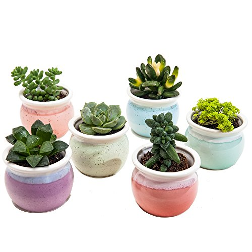 SUN-E 3 Inch Concise Style Container Bonsai Planters Ceramic Flowing Glaze Base Serial Set Six Color Succulent Planter Pot Cactus Plant Pot Flower Pot Window Box with Hole(6 in Set)