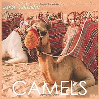 Camels: 2021 Wall & Office Calendar, 16 months Calendar