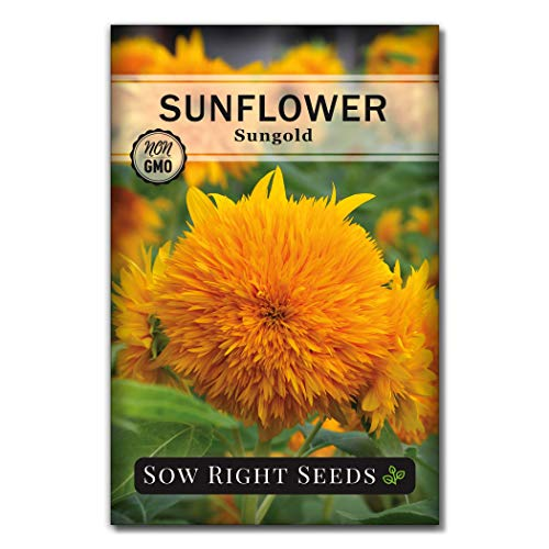 Sow Right Seeds - Dwarf Sungold Sunflower Seeds - Full Instructions for Planting, Beautiful Sunflowers to Plant, Non-GMO Heirloom Seeds, Wonderful Gardening Gift