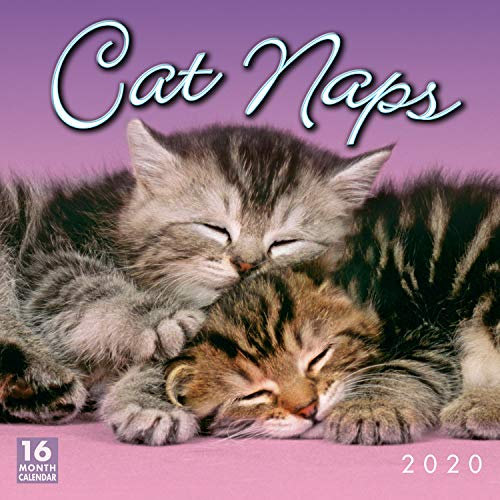 Cat Naps 2020 Wall Calendar 16-Month
