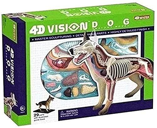 Modelo de anatomía para Perros - Modelo anatómico de Esqueleto del Perro - 4D Vision Dog Modelo de Perros Órganos extraíbles Partes del Cuerpo - para educación médica Rompecabezas de Rompecabezas