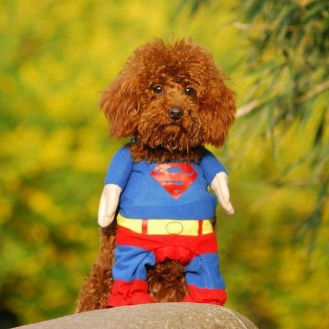 Alfie Pet - Superhero Costume Superman - Size: XS - http://coolthings.us