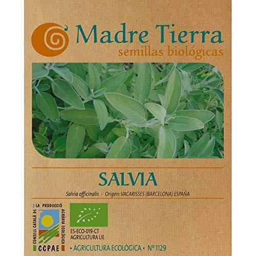 Madre Tierra - Semillas Ecologicas de Salvia -(Salvia Officinalis) Origen Vacarisses - Barcelona - Semillas Especiales - 1.5 gramos