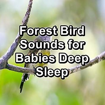 Forest Bird Sounds for Babies Deep Sleep