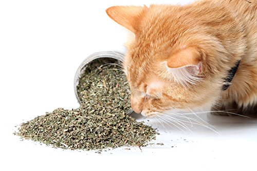 Garry's Pets - 3 Single Cups of Cat Nip