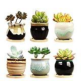 Brajttt 2.5 Inch Ceramic Succulent Planter Pot with Drainage,Planting...