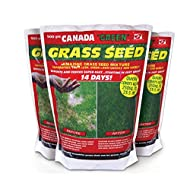 Canada Green Grass Seed Grams