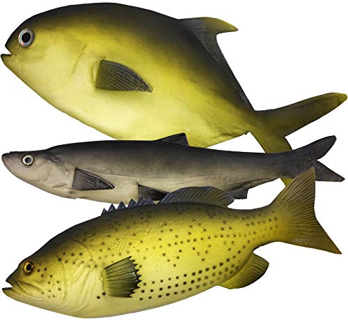3 Large Artificial Fish- 12 to 16 in - Premium Quality - Realistic Fake Fish - Best Looking Real Fish Perfect for Food Display or Food Photography Prop - Flexible Foam Material