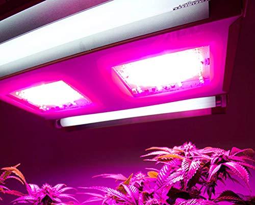 California Lightworks SS550 SolarSystem 550 LED Light, 440W, RED