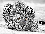 Mural 3D 400cmx280cm Leopardo Gris Leopardo De Las Nieves Papel Pintado Pared Fotomural Fotografico Sala De Estar Dormitorio Decoración De Oficina,Lienzo Hd