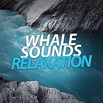 Whale Sounds Relaxation