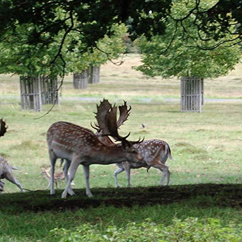 Sonidos de ciervos para la caza