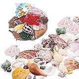 Conchas de Mar Conchas de Playa Mixtas Conchas Marinas de Naturales Concha de Encantos Artesanales para Decoración del Hogar, Fiestas Temáticas en la Playa, Decoración de Bodas, Pecera—400g