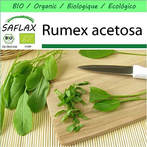 SAFLAX - Jardin dans la boîte - BIO - Oseille commune - 400 graines - Avec pot en argile, support, substrat de culture et engrais - Rumex acetosa