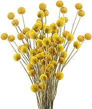 XIABAN Konstgjord blomma 30 stjälkar gyllene kula torkad blomma gyllene hammarblomma äkta blomma liten boll bukett för jul...