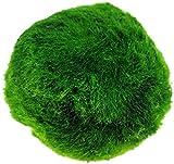 JJDSN 3-4cm Marimo Moss Balls Plantas de Acuario Paisaje para Acuario Decoración de Adornos de pecera