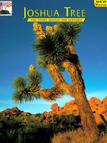 Joshua Tree: The Story Behind the Scenery