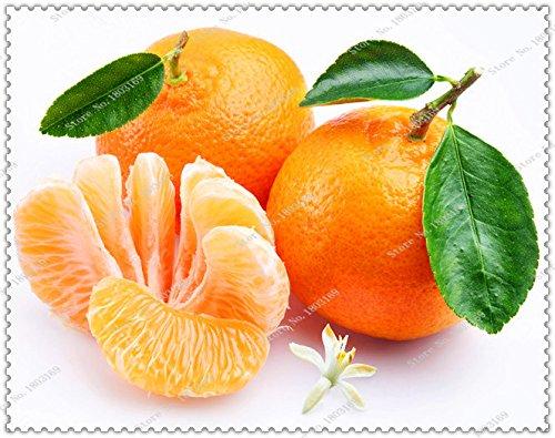 graines 100pcs / sac orange Balcon patio pot arbres fruitiers graines, mandarine, agrume, Bonsai Usine maison jardin