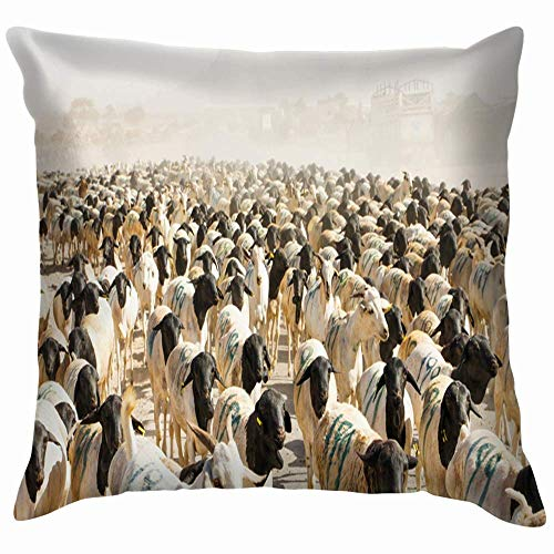 N\A Flock Sheep Near Berber Somaliland Nature Africa Cotton Throw Pillow Case Cushion Cover Home Office Decorative, Square
