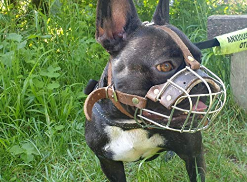 Champion Best Basket Muzzle for French Bulldog | Basket Muzzle for Frenchies Strong Metal Muzzle (B1, Brown Leather/Silver)
