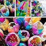 des Graines Seeds Plantez des Graines De Graines De Bulbes De Tulipes Rare Parfum Fleur Jardin Décoration Bonsai Tiesto - Graines Tulip