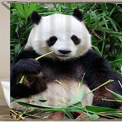 KOSALAER Duschvorhang,Panda isst Bambus,Vorhang Waschbar Langhaltig Hochwertig Bad Vorhang Polyester Stoff Wasserdichtes Design,mit Haken 180x180cm