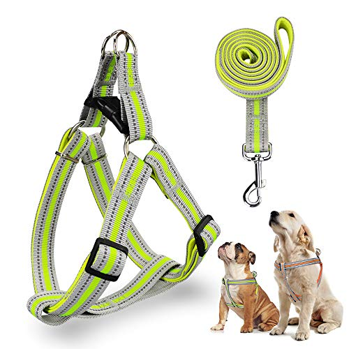 Easy Walk Harness Is Best for