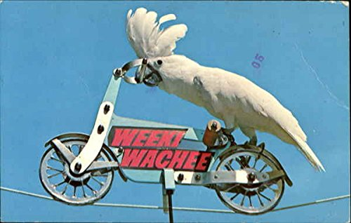 Weeki Wachee Parrot on Bicycle Weeki Wachee, Florida FL Original Vintage Postcard