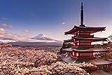 Mount Fuji Blossom Poster (91,5cm x 61cm)