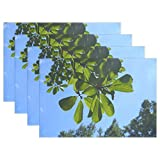 Promini Heat-Resistant Placemats, Sky Cloud Wind Natural Wood Woods Branch Vein Washable Polyester Table Mats Non Slip Washable Placemats for Kitchen Dining Room Set of 4