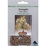 Tropica - Bonsai - Zierapfel (Malus Halliana) - 30 Samen -