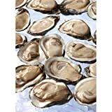 Handy 1/2 Shell Gulf Coast Oysters -- 144 per case.