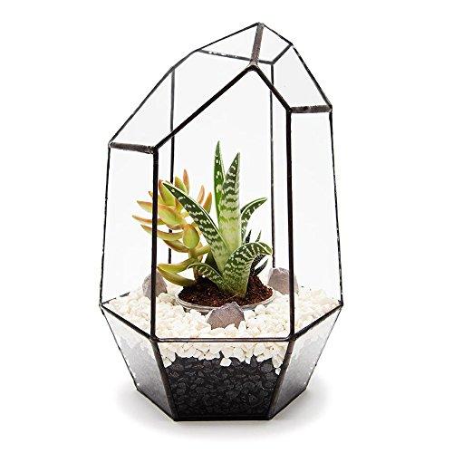 Edelsteen terrarium met levende vetplantjes en kleurrijke led-lantaarns. Het product wordt compleet gemonteerd geleverd, ook als terrarium of terrarium zonder lood, hoogwaardige glasconstructie 18 cm lang x 28 cm hoog x 28 cm breed, exclusief design van The Urban Botanist.